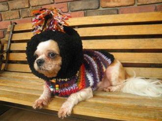 犬のセーター【ビッグフード_ネイティブセーター】.png